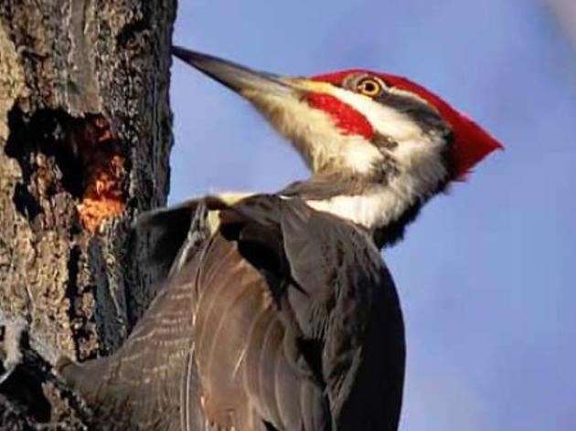 What is Birding