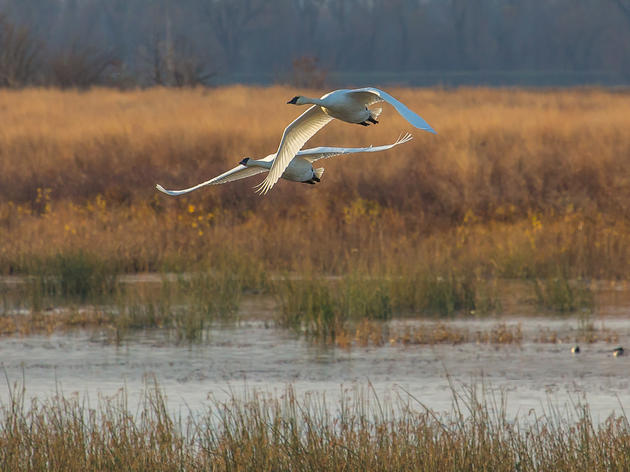 What to do at the Audubon Center at Riverlands